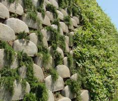 0724120535rosemary_trailing_verdura_garden_walls_opt