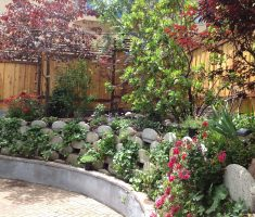 Backyard wall with drip irrigation - San Diego, CA